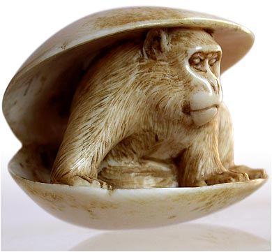 Antique Meiji Carved Ivory Monkey In Clam Shell Netsuke